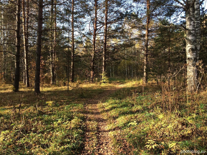 Осенний солнечный день. Дорожка среди деревьев. Золотая осень - природа России