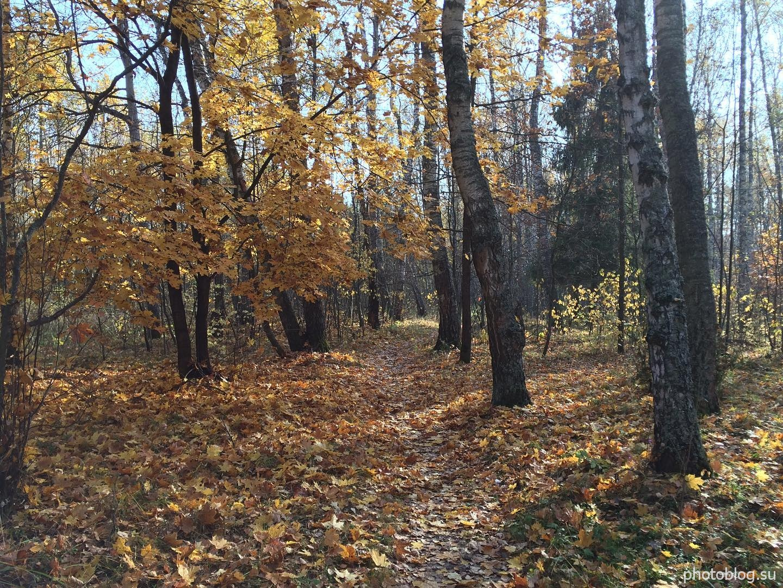 Осенний лес, листья, солнечный день. Золотая осень 2020 года