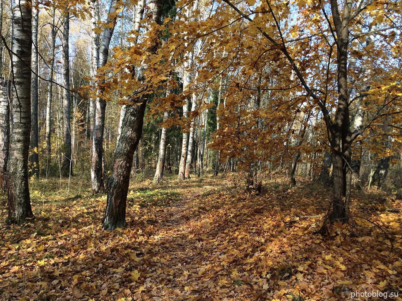 Гуляя по осеннему лесу. Золотая осень 2020 года